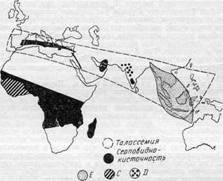 Карта распространения основных наследственных аномалий гемоглобина (Allison, 1963)