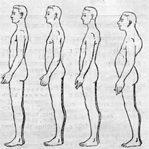 Типы телосложения по Brown