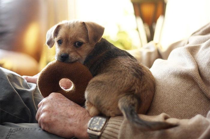 Здоровье собак: сердечная недостаточность