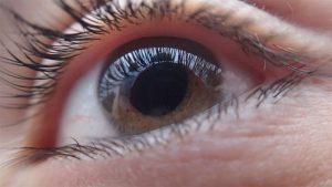 Сетчатка в ответе за зрение