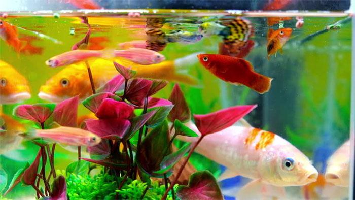 Как выбирать аквариум и аксессуары к нему?